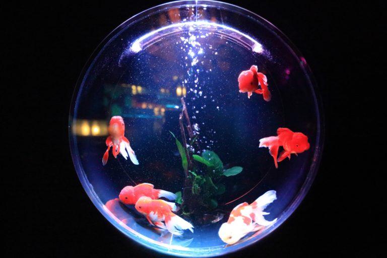 Avand — производство и продажа аквариумов